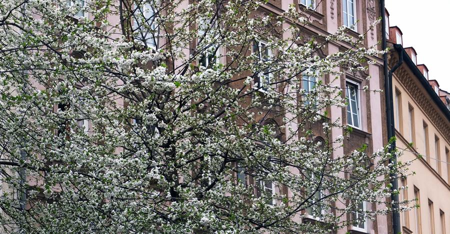 MSF14_Blütenregen